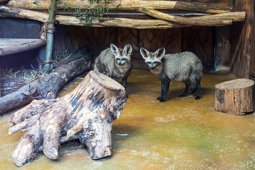 Safari Park Dvůr Králové otevřel brány návštěvníkům 3. prosince. Lidé tam přijeli během víkendu na výlet.