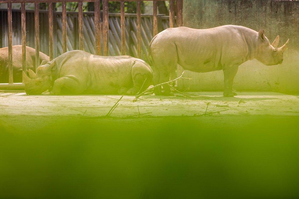 Safari par ve Dvoře Králové se slavnostně rozloučil s nosorožci, kteří budou v červnu převezeni do Afriky.