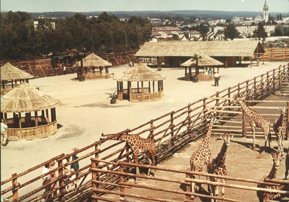Africké safari v zoo (okolo roku 1972). Africký kemp se stal natolik známým, že se pohledy odtud dostaly na pohlednice a patří knejznámějším a nejtypičtějším snímkům dvorské zoo.