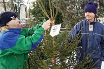 Prodej ekologických stromků v KRNAP