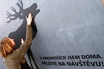 SILUETA JELENA se ocitla na vstupu do budovy KRNAP ve Vrchlabí. Nalepila ji tam Jitka Vavrušková (na snímku).