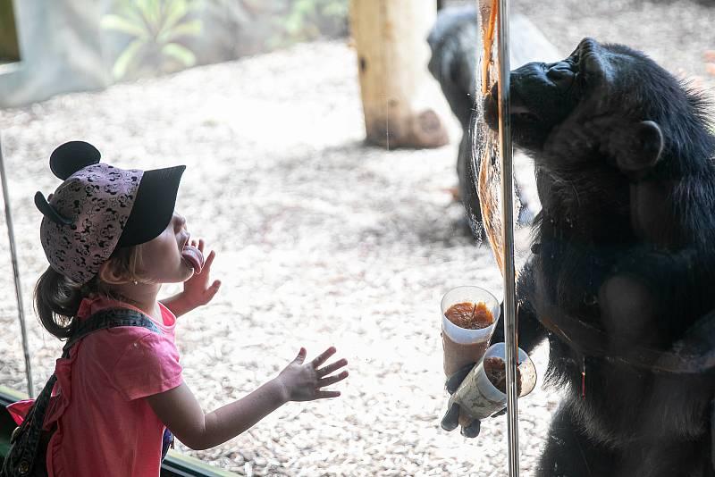 Do Safari Parku Dvůr Králové přijelo v červenci na výlet 148 088 lidí.