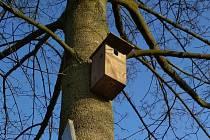 Je to přesně rok, kdy bylo v Trutnově celkem v 7 lokalitách rozmístěno 67 nových ptačích budek.