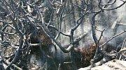 Dohašování požáru u Labské boudy.