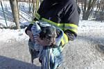 Hasiči zachraňovali psa, který spadl do řeky.