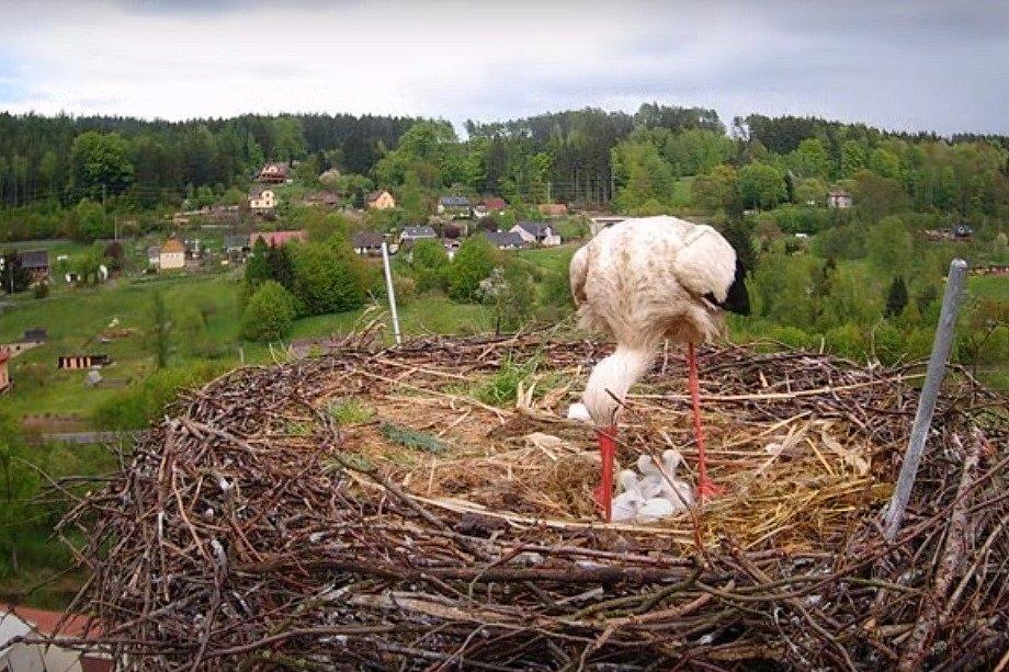 Na komíně v Bohuslavicích u Trutnova se vyklubala čápata.