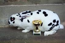 Úpičtí chovatelé pořádali na Podrači tradiční prodejní výstavu králíků, drůbeže a holubů