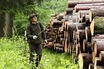 Kůrovce budou likvidovat chemicky. Správa Krkonošského národního parku má připravenou metodu hubení škůdce, čeká na získání výjimky.