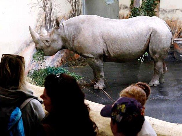 V zoo se lidé dostanou k nosorožcům na dosah ruky