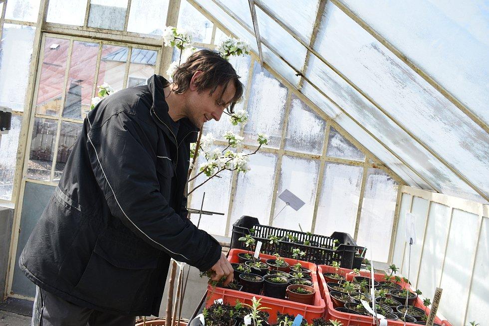Jan Lonc, vedoucí zahradník bylinkové zahrady v Domově sv. Josefa v Žirči.