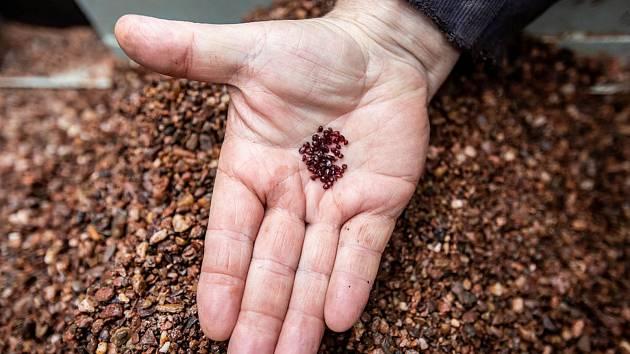 Šperkařská firma Granát z Turnova doluje drahokamy v Dolní Olešnici. Největší počet nalezených granátů má velikost 3-4 milimetry.
