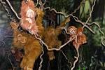 Otevření části opraveného Ptačího světa - živé orangutany nahradily ve výběhu plyšoví