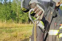 Lidé se báli hada, volali hasiče. Byla to jen užovka.
