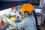 Laborantky v mikrobiologické laboratoři trutnovské nemocnice zkoumají přítomnost koronaviru v donesených vzorcích, vyšetřily jich už 3174.