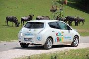 ELEKTROMOBILEM NA SAFARI. Mezi volně pobíhající zvířata se mohou návštěvníci Zoo Dvůr Králové nově vydat také v zapůjčených elektromobilech.