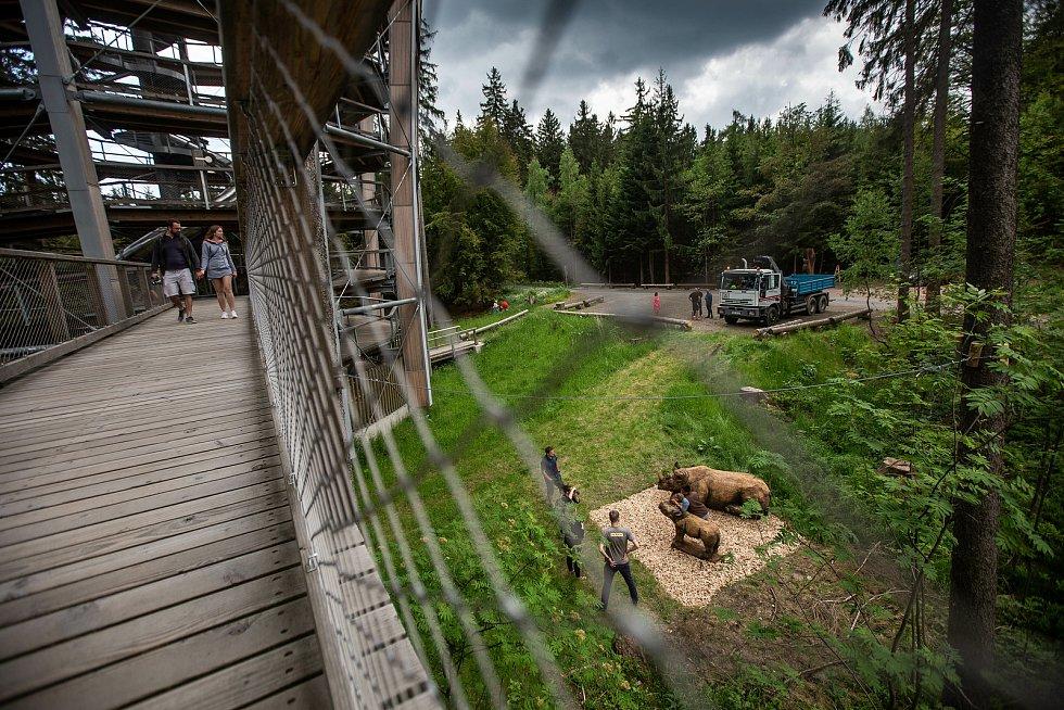 Na Stezce korunami stromů Krkonoše v Janských Lázních byly v úterý instalovány dvě sochy nosorožců od dřevosochaře Martina Kučery z Nového Bydžova.