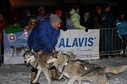 Start úvodní noční etapy 27. ročníku Ledové jízdy musherů od sjezdovky Javor v Peci pod Sněžkou, při které doplňuje posádku psích spřežení běžkař, tažený na laně.