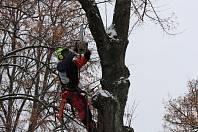 Kácení stromů na Benešově nábřeží ve Dvoře Králové.