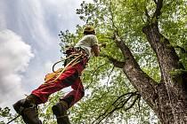Když se léčí starý strom, padají i třísky