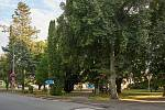 Lípové náměstí v Trutnově Poříčí.
