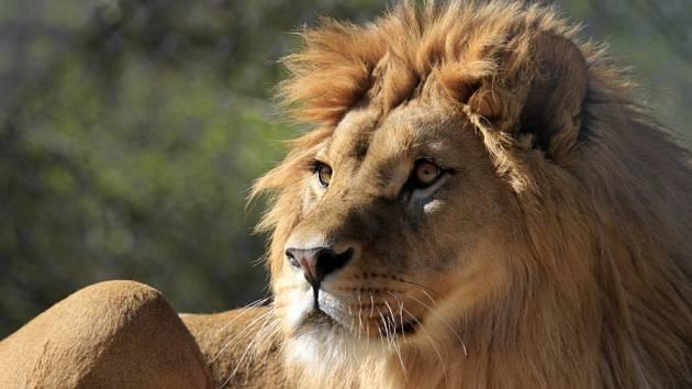Africké safari ve Dvoře Králové nad Labem.