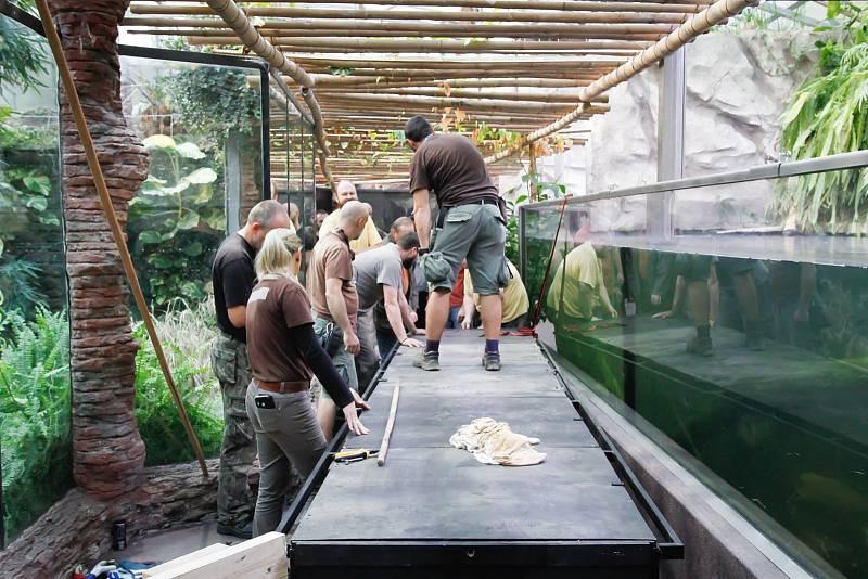 Odjezd Krakena a Penelopy ze Safari Parku Dvůr Králové.