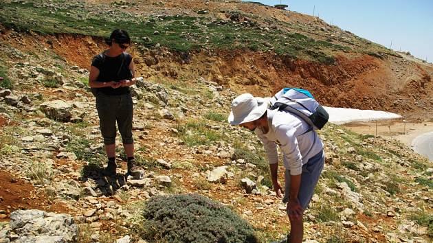 Dobrovolník ze Společnosti pro ochranu přírody v Izraeli ukazuje na hoře Chermon místní endemit, zakrslou rostlinu, která neroste nikde jinde na světě
