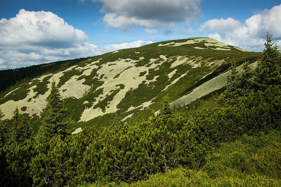 Porosty kleče na hoře Malý Šišák v Krkonoších.