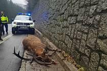 Pes uštval jelena. Ten spadl z opěrné zdi a zabil se.