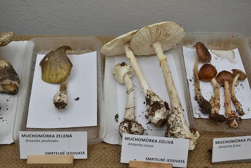 Muchomůrky zelené a jízlivé jsou smrtelně jedovaté houby.