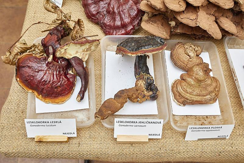 Na výstavě hub v Muzeu Podkrkonoší v Trutnově se objevilo více než 200 druhů.