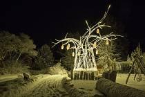 Vánoční zoo se otvírá, v sobotu pod svátečním baobabem.
