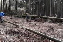 V dvorských lesích jsou škody za 300 tisíc korun.
