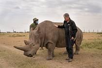 Nájin se narodila v Safari Parku Dvůr Králové v roce 1989 a v roce 2009 byla spolu s dalšími třemi severními bílými nosorožci přemístěna do rezervace Ol Pejeta v Keni.