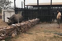 Nosorožec Manny v Akageře.