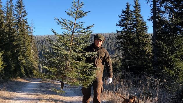 Lidé nemusejí mít obavu, že by koupí vánočního stromku přispěli kpoškozování lesa. Naopak pomůžou ke zlepšení jejich stavu. Utržené peníze se totiž příští rok do lesů vKrkonoších vrátí vpodobě nových stromků.