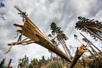 Lesy loni poničila větrná smršť.
