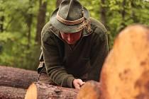 Česká lesnická akademie v Trutnově bojuje proti kůrovci.