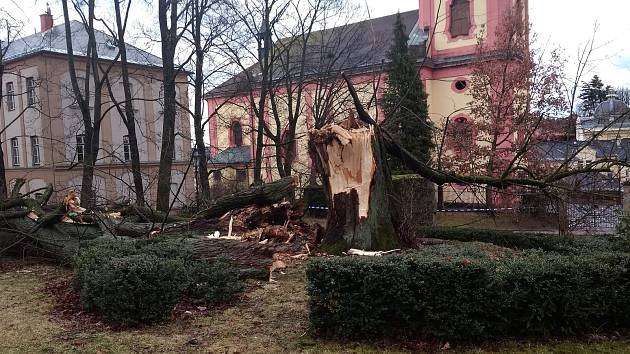 Sabine shodila u zámku tři sta let starý strom.