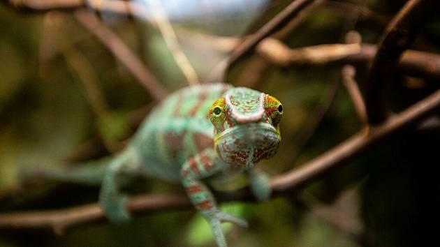 Safari Park Dvůr Králové navštívilo od června do začátku října 390 759 lidí.