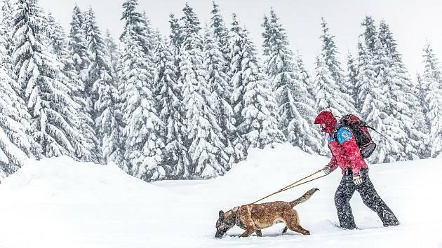Cvičení Horské služby s lavinovými psy na hřebenech Krkonoš.