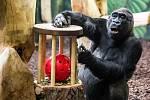 Tadao dostal míček v kleci