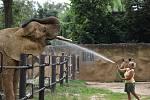 Sprchování slonů v Safari Parku Dvůr Králové.