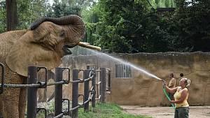 Sprchování slonů v Safari Parku Dvůr Králové
