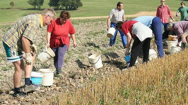 Sběr brambor v Dolních Štěpanicích u Jaromíra Petráka