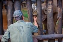 Nosorožci z dvorské zoo už jsou v národním parku Akagera.