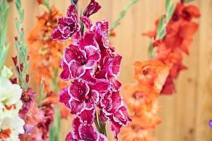 V Trutnově začíná legendární výstava Svět květin.
