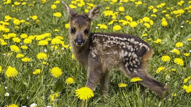 Jaro je tady! Nechme mláďata v klidu žít.