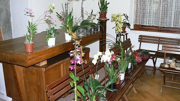 Setkání Klubu vozíčkářů v Trutnově s pěstitelem orchidejí Petrem Náhlovským