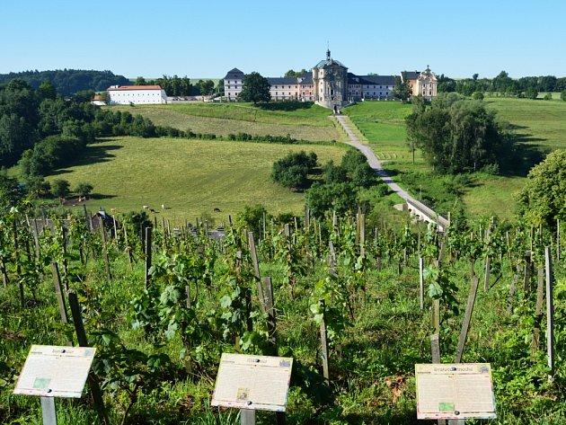 Vinohrad v Kuksu